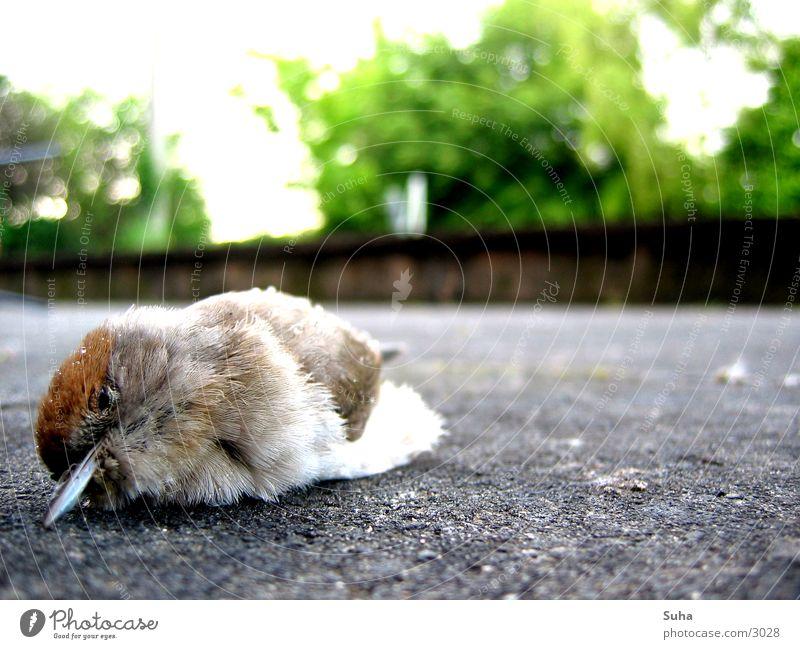Es geschah am hellichten Tag... Vogel Tod Feder terasse Vogelgrippe