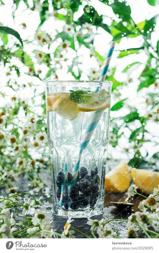 Sommer Heidelbeerlimonade im Glas Korbblütengewächs Gänseblümchen Blume frisch grün High Key Saft Blatt Zitrone Limonade Limone Papierstrohhalm Minze natürlich