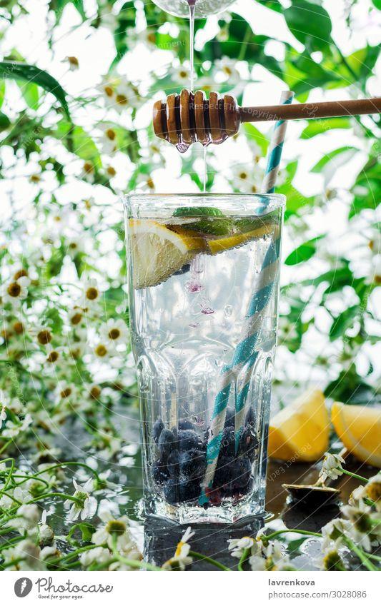 Sommer Heidelbeerlimonade im Glas Getränk Blaubeeren Zitrusfrüchte Cocktail kalt Coolness Korbblütengewächs Gänseblümchen trinken Blume frisch Frucht grün