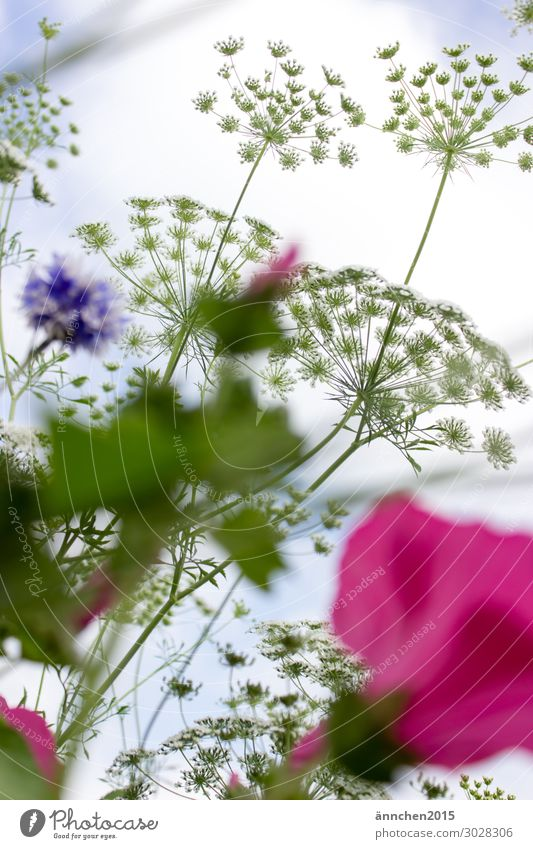 Dem Himmel so nah... rosa weiß violett grün hell-blau Blume Blumenfeld Sommer Außenaufnahme Blüte Blatt Frühling pflücken