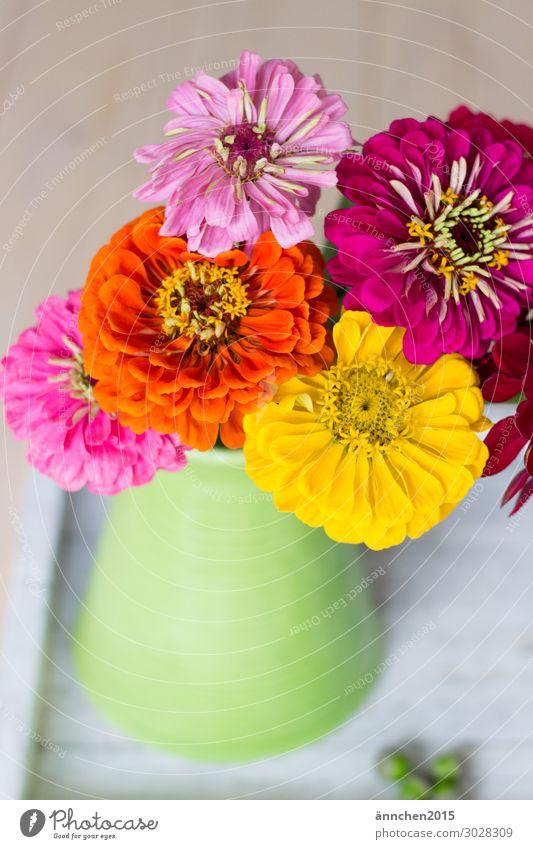 BunteBlumenLiebe mehrfarbig Farbe grün gelb orange rosa Blüte Sommer Frühling Blumenstrauß Vase Dekoration & Verzierung Natur Innenaufnahme Freude harmonisch