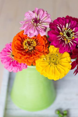 BunteBlumenLiebe Natur Sommer Farbe grün Erholung Freude gelb Blüte Frühling orange rosa Dekoration & Verzierung Blumenstrauß harmonisch Vase