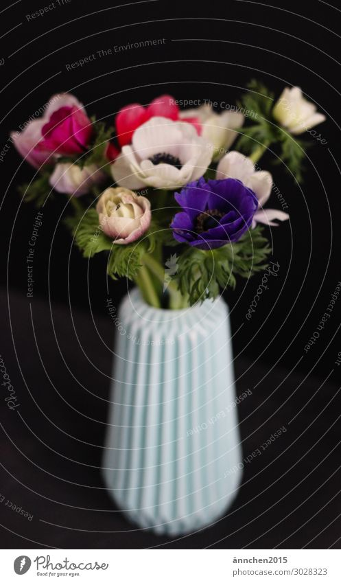 Blumenstrauß Innenaufnahme Vase schwarz dunkel türkis Anemonen mehrfarbig Geschenk Muttertag pflücken Natur Pflanze Blüte