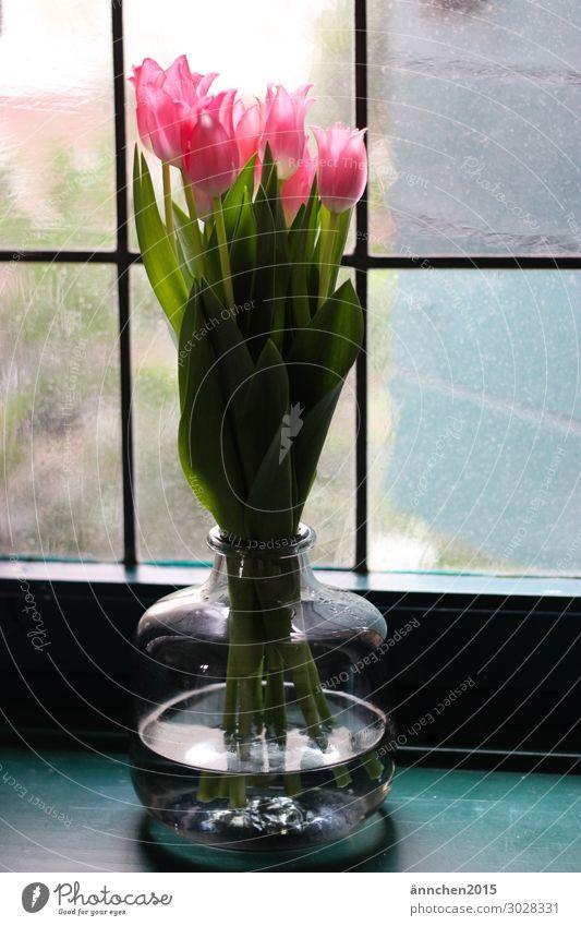 Tulpen rosa grün Innenaufnahme Fenster alt Gegenlicht Vase blau Glas Dekoration & Verzierung Frühling Blume Blumenstrauß Sprossenfenster