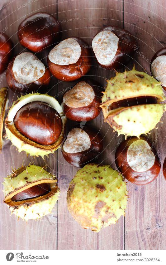 Kastanien Frucht Natur Innenaufnahme stachelig Herbst Kindheit Kindheitserinnerung sammeln Wald Baum braun grün Holz