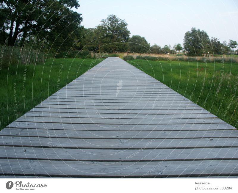 laga wolfsburg Natur Himmel grün Gras Holz Rasen Schilfrohr Steg Linse