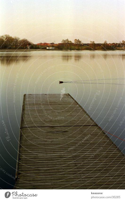 ente Wasser schön Himmel Holz See Stimmung braun Steg Teich Ente Linse