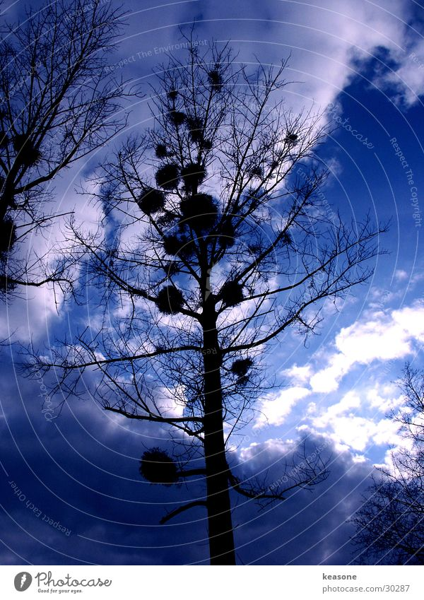 blue velvet Baum Licht Dämmerung Himmel blau Perspektive http://www.keasone.de