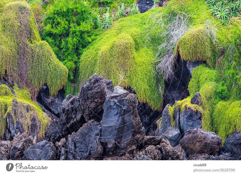 Felsen in Porto Moniz auf der Insel Madeira, Portugal Erholung Ferien & Urlaub & Reisen Tourismus Natur Landschaft Pflanze Wasser Küste blau grün Idylle