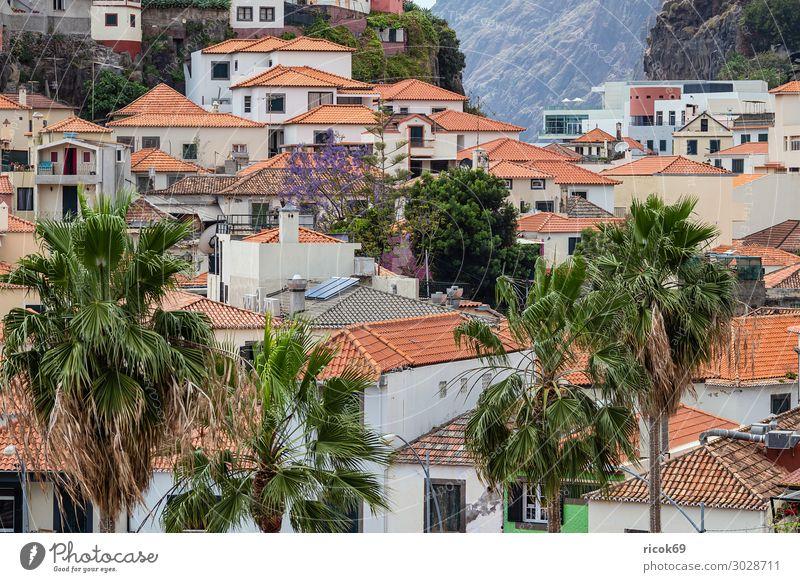 Blick auf Camara de Lobos auf der Insel Madeira, Portugal Erholung Ferien & Urlaub & Reisen Tourismus Haus Natur Landschaft Klima Wetter Baum Felsen Stadt