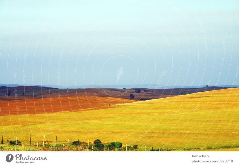 gemälde Sonnenlicht Kontrast Licht Dämmerung Abend Idylle schön Farbfoto Außenaufnahme Menschenleer Tag Bauernhof Landwirtschaft Fernweh Südafrika Einsamkeit