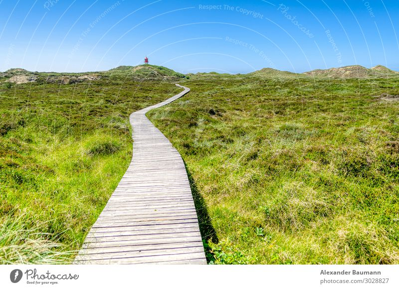 wooden bridge in a meadow, blue sky Wellness Leben Erholung Ferien & Urlaub & Reisen Ferne Freiheit Natur Park Glück Optimismus Zen green natural grass