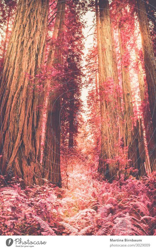 Natur Pflanze Landschaft Baum Wald Umwelt Stadtrand Farn Grünpflanze Endzeitstimmung