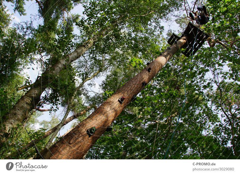 Abseilen im Kletterwald Mensch maskulin Junger Mann Jugendliche Körper 1 13-18 Jahre 18-30 Jahre Erwachsene Himmel Baum Wald Holz Sport Tapferkeit Mut abseilen