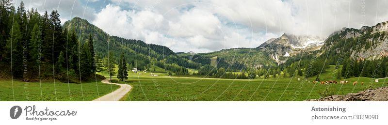 Wurzeralm Umwelt Natur Landschaft Himmel Wolken Horizont Sommer Wetter Pflanze Baum Wald Hügel Alpen Berge u. Gebirge Gipfel Österreich Straße Wege & Pfade Tier