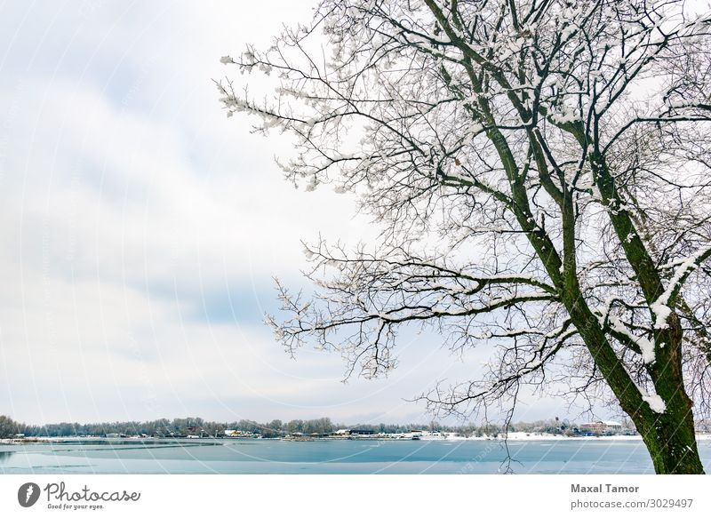Eine Pappel am Fluss Dnieper in Kiew, im Winter. Ferien & Urlaub & Reisen Schnee Umwelt Natur Landschaft Himmel Wolken Wetter Baum Wald See Coolness hell