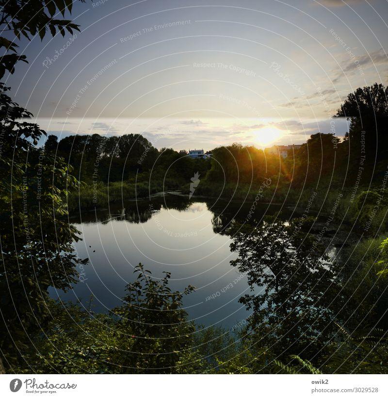 Abendgruß Umwelt Natur Landschaft Pflanze Himmel Wolken Horizont Sonne Sommer Schönes Wetter Baum Sträucher Park Wald Teich See Wien Hauptstadt leuchten