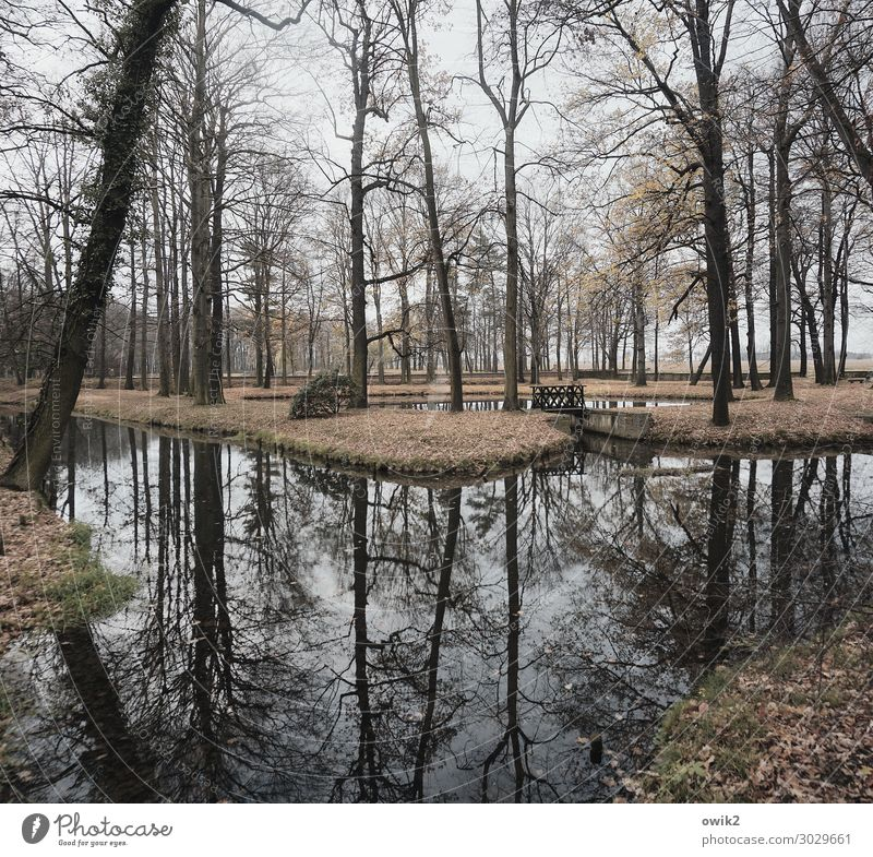 Tag der Stille Umwelt Natur Landschaft Pflanze Herbst Baum Gras Sträucher Park Bach trist ruhig Idylle Windstille friedlich Holz Wasser Wasseroberfläche