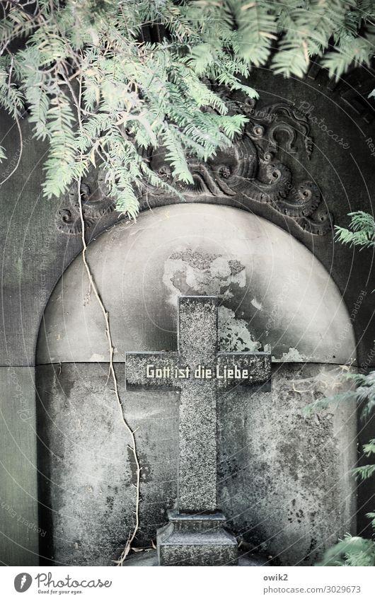 Gewissheit Pflanze Baum Dresden Grabstein Kreuz Christliches Kreuz Stein Schriftzeichen alt fest historisch Liebe Güte ruhig Hoffnung demütig Traurigkeit Trauer