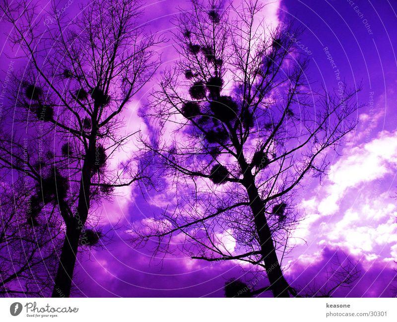googleymoogley Baum violett schwarz Himmel Linse Perspektive http://www.keasone.de