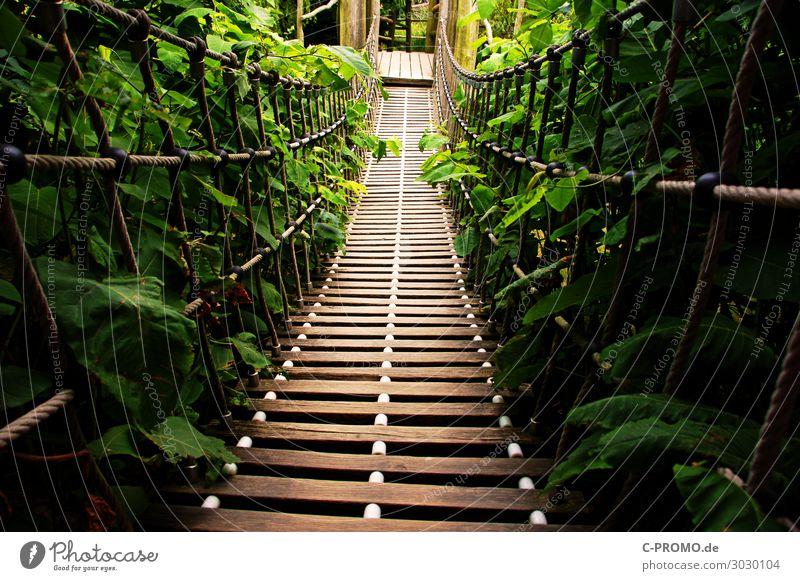 Ab in den Dschungel! Ferien & Urlaub & Reisen Natur grün Wege & Pfade braun wandern Abenteuer Sicherheit Vertrauen Mut Expedition Hängebrücke