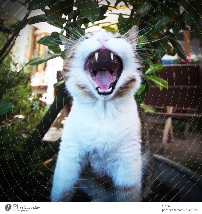 Lautsprecherin Pflanze Haus Tier Haustier Katze Tiergesicht 1 Lächeln außergewöhnlich Fröhlichkeit rebellisch wild Lebensfreude Kraft Mut Leidenschaft