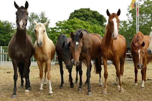 Pferde Umwelt Erde Frühling Sommer Herbst Feld Tier Tiergruppe Herde warten glänzend groß Reiten Tierzucht Farbfoto Menschenleer Tag Zentralperspektive Totale