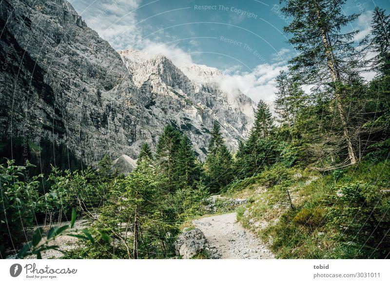 Bergidylle Himmel Natur Sommer Pflanze Landschaft Baum Wolken Einsamkeit Wald Ferne Berge u. Gebirge Wege & Pfade Gras Felsen Horizont ästhetisch