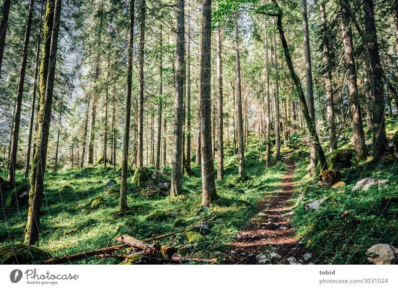 Waldpfad Natur Landschaft Pflanze Frühling Sommer Schönes Wetter Baum Gras Sträucher Moos Hügel Wege & Pfade Ferne Unendlichkeit Idylle Ziel Nadelwald urwüchsig