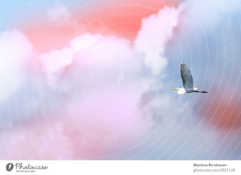 Einzelne Brid, die frei vor Wolken am Himmel fliegen. schön Freiheit Sommer Meer Natur Vogel Flügel wild weich blau weiß Top Falken Wanderfalke Hintergrund