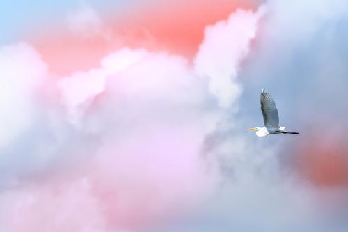 Himmel Natur Sommer blau schön weiß Meer Wolken Textfreiraum Freiheit Vogel fliegen wild Aussicht Feder Flügel
