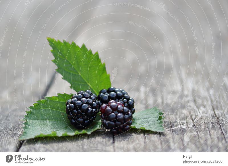 drei reife Brombeeren mit Blättern liegen auf einem alten Holztisch Lebensmittel Frucht Blatt ästhetisch Gesundheit klein lecker natürlich saftig grau grün