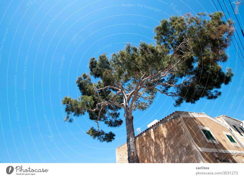Einfach mal die Seele baumeln lassen Spanien Balearen Mallorca Pinie Allepo Kiefer Fassade Gebäude alt Naturstein Wärme Sommer Ferien & Urlaub & Reisen Erholung