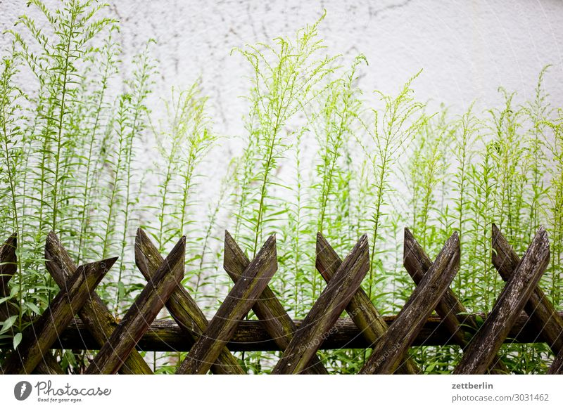 Jägerzaun Zaun Holzzaun jägerzaun Nachbar Grundstück Garten Gartenzaun Grenze Barriere Schrebergarten Menschenleer Textfreiraum Pflanze Blüte goldlack