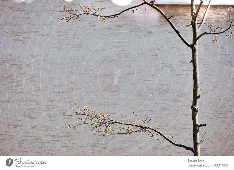 Zartes Grün Pflanze Baum Blatt Stadt Haus Gebäude Mauer Wand Glück Gedeckte Farben Außenaufnahme Nahaufnahme Detailaufnahme Menschenleer Textfreiraum links