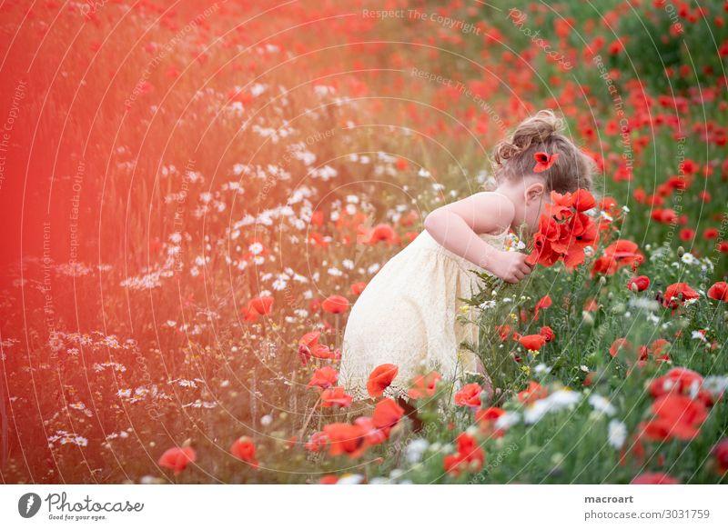 Mohnblüte Mohnfeld Kind Mädchen Sommer Frühling weiß Kleid Frau feminin stehen Natur natürlich Geruch Blume Klatschmohn Duft