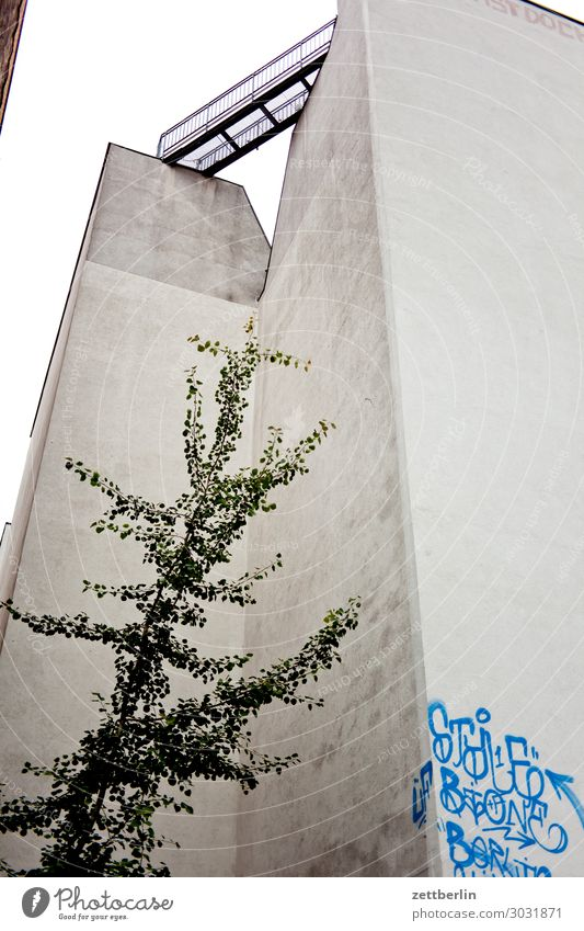 Einzelbaum im Hinterhof Berlin Großstadt Haus Kreuzberg Stadt Wohngebiet Wohnhaus Baum Laubbaum Pflanze Wand Mauer Brandmauer Ecke Nische Menschenleer