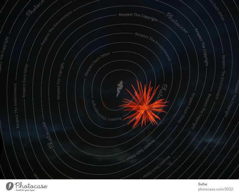 Dezentes Feuerwerk rot Regen Beleuchtung Brand Stern (Symbol) Silvester u. Neujahr Freizeit & Hobby Japan Flamme Düsseldorf Schwanz Explosion Funken Rhein