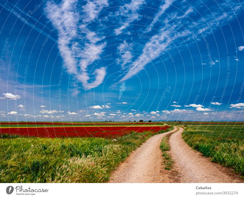 Weizenfelder im Frühjahr in der Autonomen Gemeinschaft Spaniens. Lifestyle Freude Freizeit & Hobby Freiheit Sommer Sonne Mensch Mann Erwachsene Hand Natur