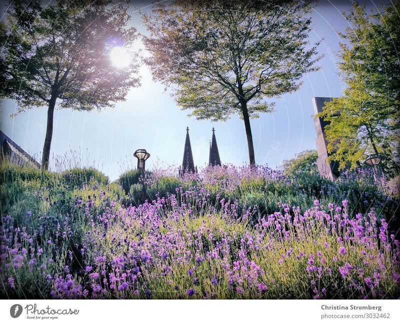 Domspitzen Liebe deine Stadt Natur Pflanze Sonnenlicht Sommer Schönes Wetter Köln Kölner Dom Kölle Nordrhein-Westfalen Rheinland Rheinpromenade Kirche Bauwerk