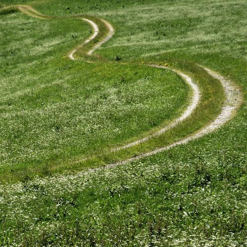 der Weg Natur Sommer Pflanze grün weiß Landschaft Blume Umwelt Wege & Pfade Wiese Gras paarweise Verkehr Feld Landwirtschaft lang