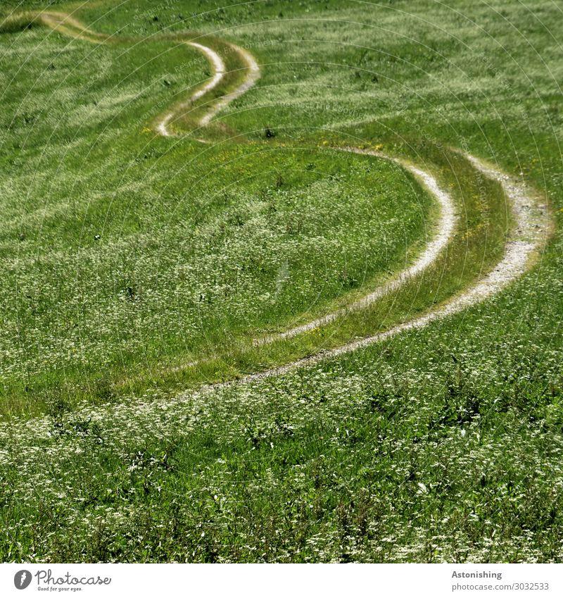 der Weg Umwelt Natur Landschaft Pflanze Sommer Blume Gras Wiese Feld Verkehr Wege & Pfade lang grün weiß Kurve Bogen paarweise Landwirtschaft Farbfoto
