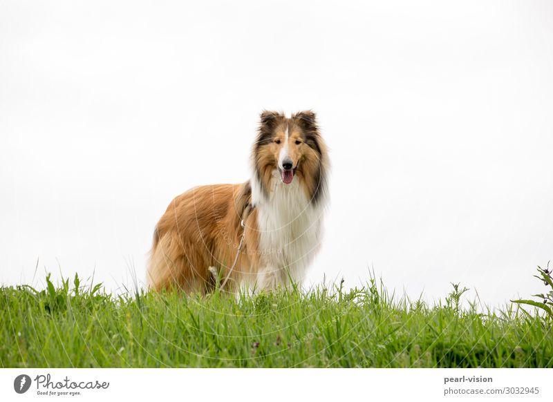 Merlin Frühling Haustier Hund 1 Tier Freundlichkeit frisch Wachsamkeit Neugier Interesse Farbfoto Außenaufnahme Textfreiraum rechts Textfreiraum oben