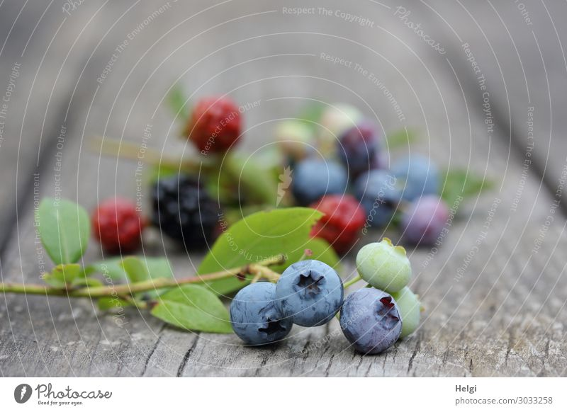 frisch geerntete reife Heidelbeeren und Brombeeren liegen auf einem alten Holztisch Lebensmittel Frucht Blaubeeren Ernährung Bioprodukte Vegetarische Ernährung