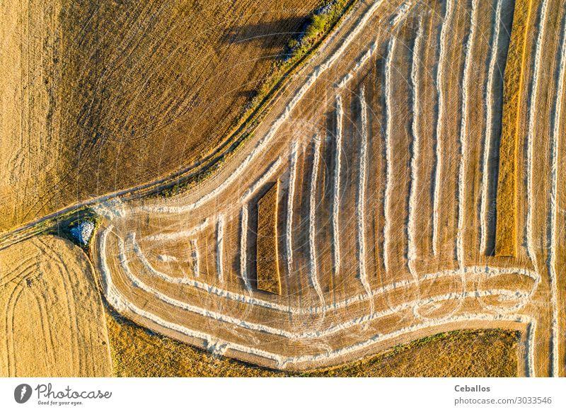 Getreidefelder in Castilla y Leon Spanien bird´s aus der Sicht von bird´s Brot Sommer Sonne Natur Landschaft Pflanze Himmel Wolken Horizont Nutzpflanze Wiese