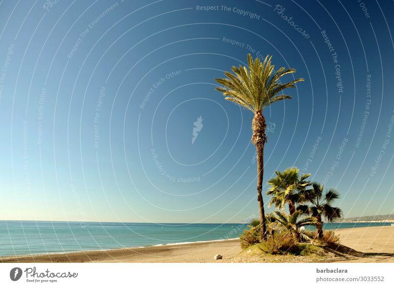 Andalusien im Winter Ferien & Urlaub & Reisen Tourismus Freiheit Strand Natur Landschaft Urelemente Wasser Sonne Klima Pflanze exotisch Palme Küste Meer
