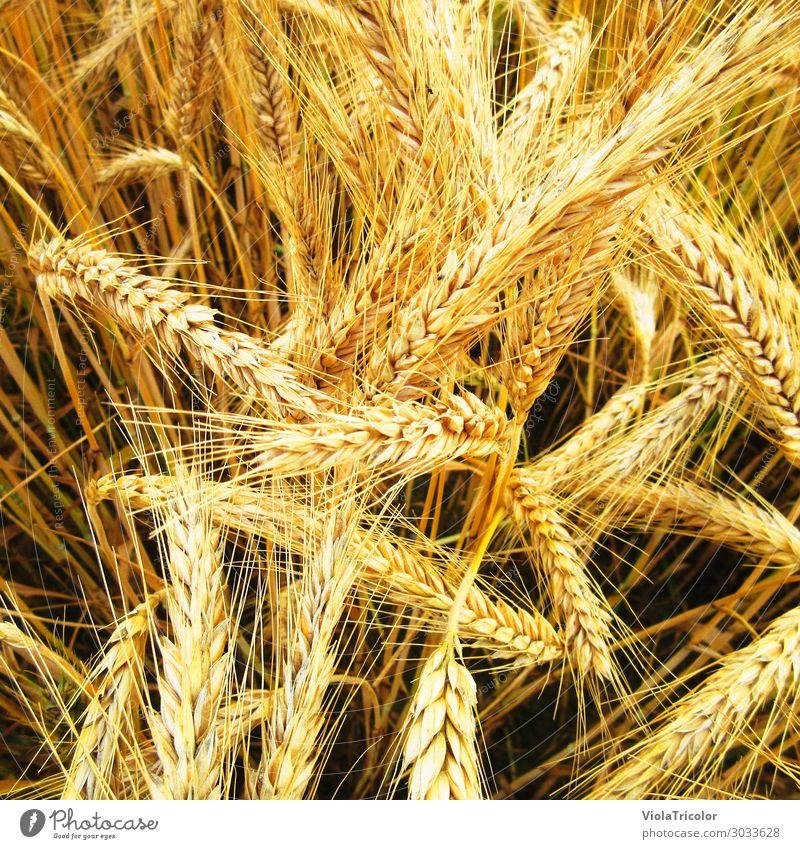 körnig 1 Lebensmittel Getreide Brot Brötchen Ernährung Frühstück Bioprodukte Bier Gesunde Ernährung Erntedankfest Landwirt Landwirtschaft Forstwirtschaft