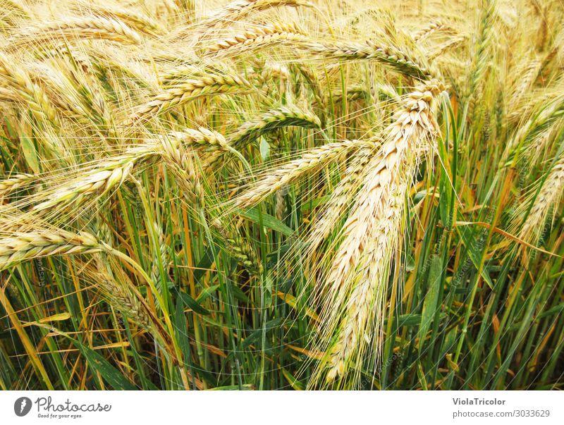 körnig 2 Lebensmittel Getreide Ernährung Frühstück Bioprodukte Bier Erntedankfest Bauer Landwirtschaft Forstwirtschaft Wissenschaften Natur Tier Pflanze Feld
