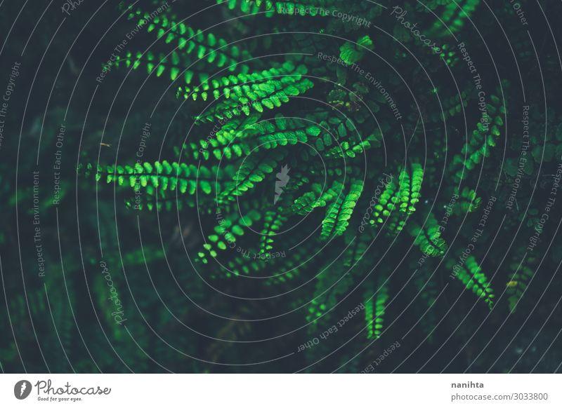 Natur Pflanze Farbe grün Blatt dunkel schwarz Umwelt wild frisch exotisch Oberfläche Konsistenz rau organisch Farn