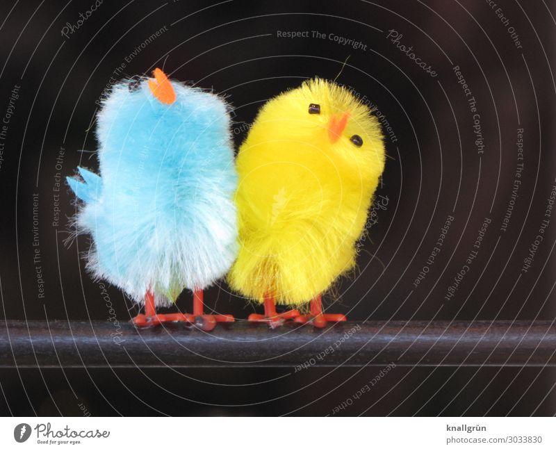 Piepmätze Tier Vogel 2 Deko-Vogel stehen klein niedlich blau gelb orange schwarz Gefühle Sympathie Freundschaft Zusammensein Farbe weich Tierpaar Farbfoto